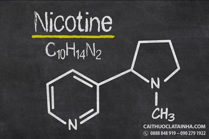 nicotine-chat-gay-nghien-chet-nguoi
